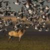 Overweldigende natuur in ons kleine Nederland